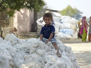 A child sits on raw cotton in Saurashtra, Gujarat. This cotton will become ethical, traceable clothes for Where Does It Come From? www.wheredoesitcomefrom.co.uk sustainable