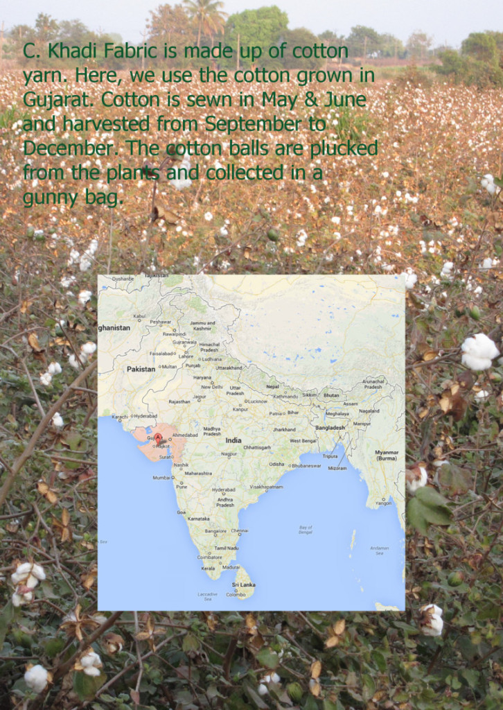 cotton growing in Gujarat. The story handwoven khadi cotton bag from Where Does It Come From? wheredoesitcomefrom.co.uk