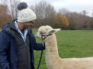 alpaca hat with alpaca